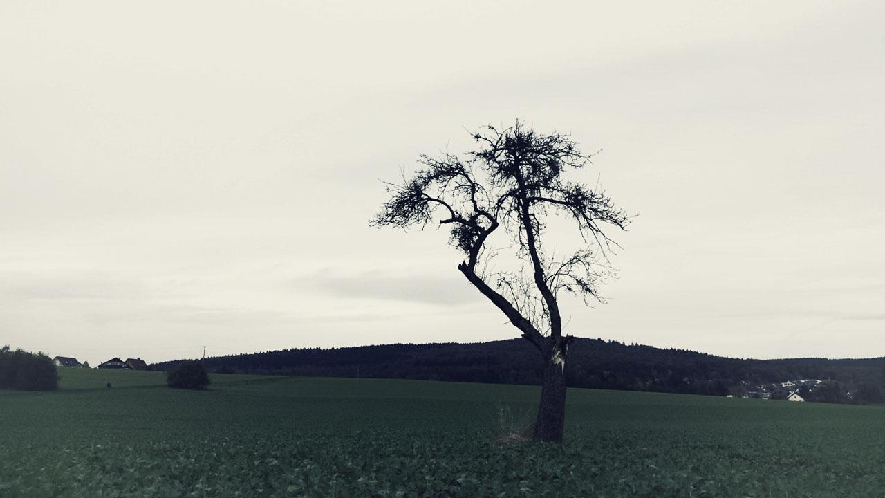 Baum Schäfersberg bearbeitet