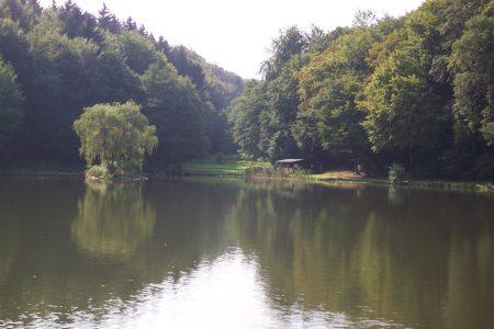 Waldsee-View