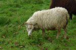 Doch die Tiere kümmerten sich nur um ihr Gras.