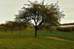 Und der letzte Apfelbaum