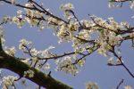 Blüten und Himmel