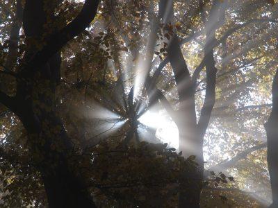 Theißtal im Nebel